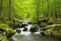 natuur fotobehang