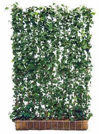 klimplanten en haagplanten