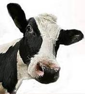 koeienbenodigdheden assorrtiment