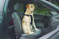 Wandel- En Autogordel Hond XL Onderweg met de hond