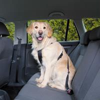 Wandel- en Autoharnas met Gordel voor de hond M