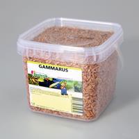 nerus Gammarus 1.2 liter