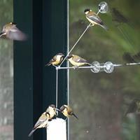 Vivara Raamhanger BirdSwing XXL