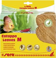 Sera Catappa Leaves M 16 - 20 cm