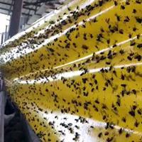 biobestbv Vliegenlijmband XXL 30cm 100m