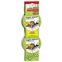 Mierenlokdoosjes - Mieren - Luxan
