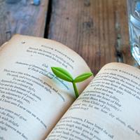 Suckuk Kiemplant boekenlegger (set van 3)