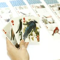 Kikkerland 3D speelkaarten - Vogels