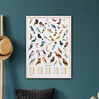 Luckies The Chartologist Poster - Vogels -