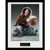 GB eye Fantastic Beasts 2 Framed Poster Nifflers 45 x 34 cm