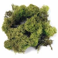 Rayher hobby materialen Decoratie mos lichtgroen 200 gram Groen