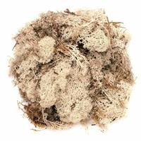 Decoratie mos naturel 200 gram Beige