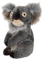 Daphne Koala