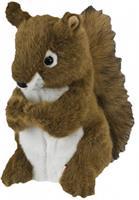 Daphne Squirrel
