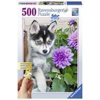 Ravensburger Puzzel Husky 500 Stukjes