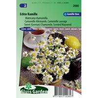 Sluis Garden Kamille zaden - Matricaria chamomilla