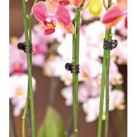 Nature Orchideeenclips