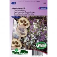 Tuin-Judaspenning bloemzaden – Judaspenning mix
