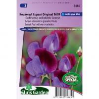 Ouderwetse welriekende siererwt bloemzaden – Reukerwt Cupani Original 1699