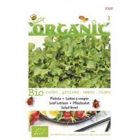 Pluksla Lactuca sativa Green Salad Bowl - Groentezaden - 1g