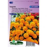 Oranje lage dubbele Afrikaantjes bloemzaden – Tangerine
