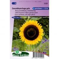 Reuze Zonnebloem enkelbloemig bloemzaden - Zonnebloem hoge gele