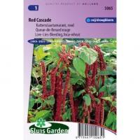 Amaranthus Caudatus zaden Red Cascade