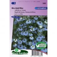 Juffertje in `t Groen bloemzaden – Miss Jekyll Blue