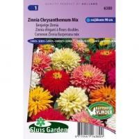Zinnia Elegans zaden Chrysanthemum mix