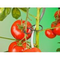 Tomatenplantringen dia. 65mm set a 25 stuks
