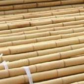 Bamboestokken 305cm ø20/22mm per 25 stuks