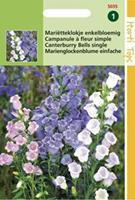 Hortitops Campanula Medium Enkelbloemig Gemengd