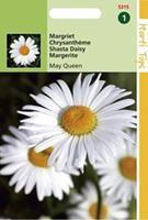Hortitops Chrysanthemum Vernale Leuc.May Queen