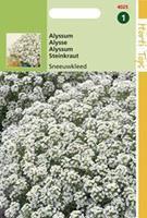 Hortitops Alyssum Lobularia Mar. Procumbens Sneeuwkleed