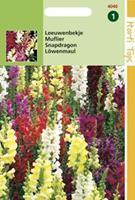Hortitops Leeuwenbekje Antirrhinum majus - Bloemzaden - 0,5gram