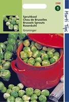 Hortitops Spruitkool Groninger