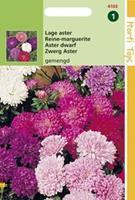 Hortitops Callistephus Chinensis Dwergchrysanthemum Gemengd