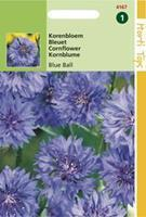 Hortitops Centaurea cyanus dubbelbloemig Blue Ball