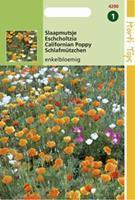 Hortitops Eschscholtzia Californica Enkelbl. Gemengd