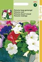 Hortitops Petunia Hybrida Nana Compacta Gem.