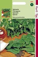 Hortitops Spinazie Spinacia oleracea Nieuwzeelandse - Groentezaden - 5gram