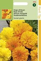 Hortitops Tagetes Erecta Sunset Giants Gem.