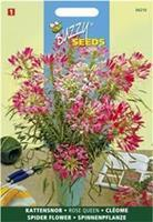 Buzzy Cleome Spinosa Rose Queen