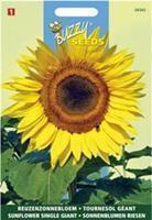 Buzzy seeds zaden reuzenzonnebloem giganteus