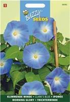 Buzzy Ipomoea Tricolor Rubro C. Clark S Blue