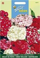 Buzzy Dianthus barbatus nanus compactus Dubbel Gemengd