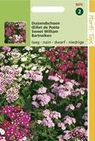Hortitops Dianthus Barb. Nanus Compactus Dubbel Gemengd