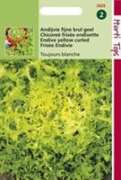 Hortitops Krulandijvie Cichorium endivia Fijne Krul Geel (Altijd Witte) - Groentezaden - 3gram