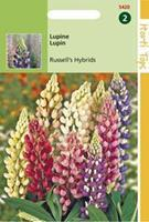 Hortitops Lupinus Polyphyllus Russell S Hybr. Gemengd