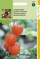 Hortitops Physalis Franchetti Gig. Lampionplant